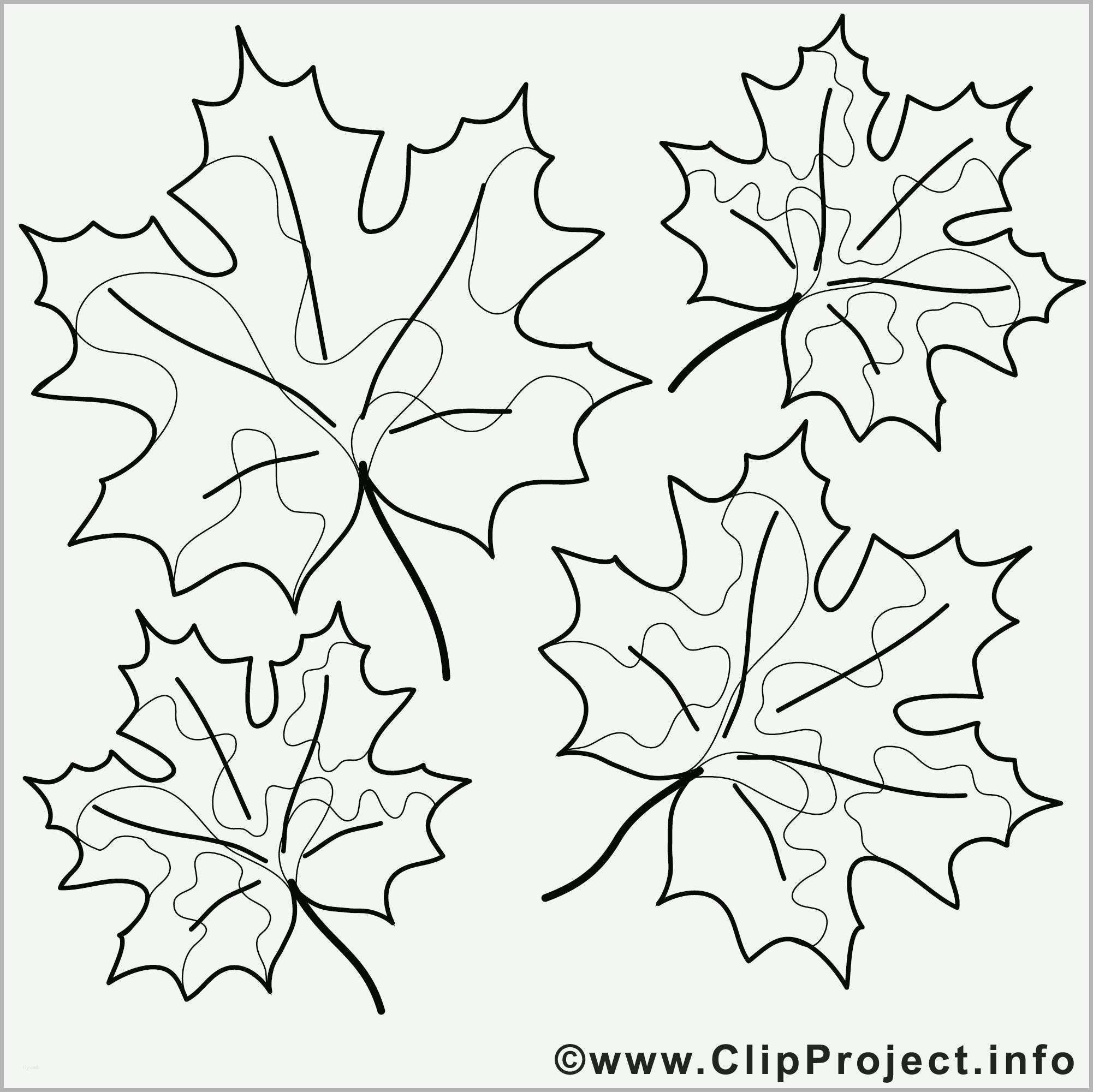 phänomenal window color vorlagen herbst best ahornblatt